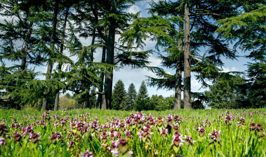 Arboretum de Versailles-Chèvreloup