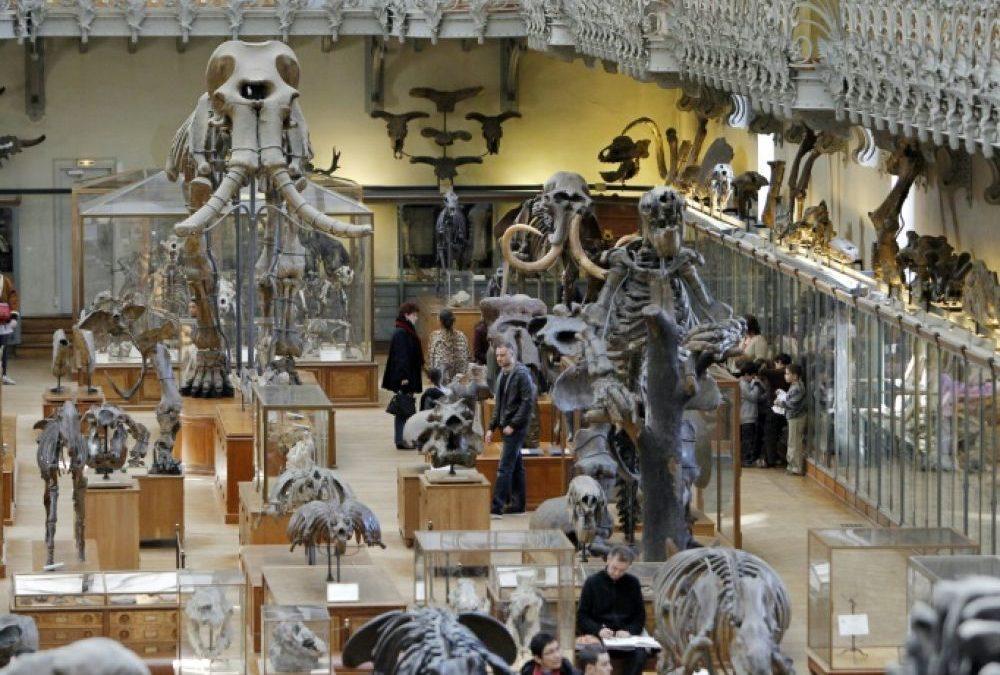 Musée d'histoire naturelle paris : visite, horaires, tarifs