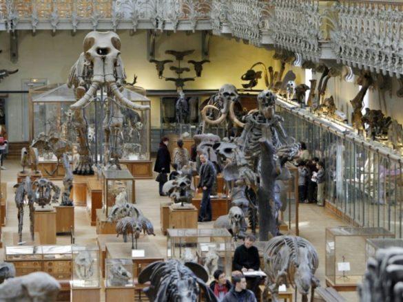 Musée d'Histoire Naturelle à Paris